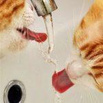 Furfangos víz – 1. rész