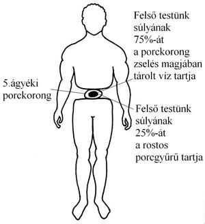 derekfajas-kep001